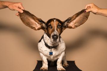 Portada de la guía del oído absoluto.